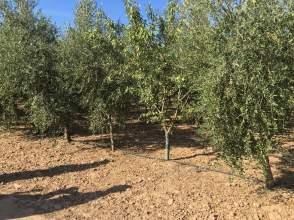 Finca rústica en Camino Artesa de Lleida
