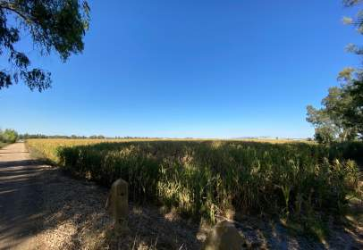 Rural Property in Villanueva de La Serena