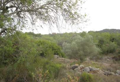 Rural Property in Partida Pou de La Basa