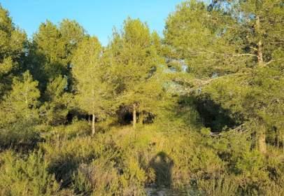 Terreny a Riba-Roja de Túria