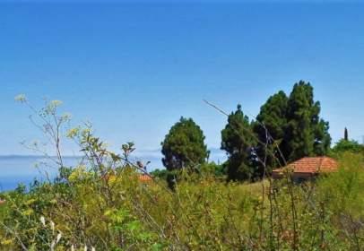Finca rústica en Camino del Molino Pinar