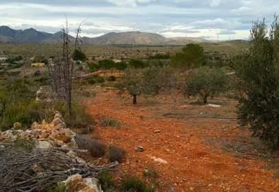 Land in calle Partida Plá de Cerezo, Polígono 7, Parcela 42-