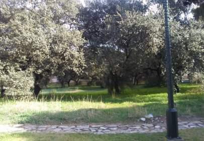 Terreny a calle los Pinares de La Juliana, nº 34